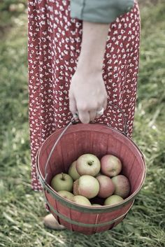 Country Living - apple harvest