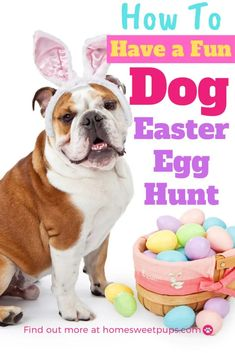 Get ready to have a fun dog easter egg hunt with these ideas on how you can organize an easter egg hunt event for your dogs. Dog Easter Eggs, Easter Cats, Homemade Dog Treats, Pet Treats, Cute Dogs And Puppies, Doggies, Dog Activities, Easter Celebration, Egg Hunt