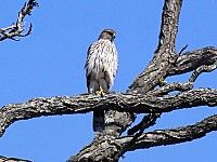 Birds and Birding at Mount Auburn Cemetary