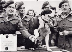 Border collie Rob made over 20 parachute descents! He won his award on 22 January 1945 for helping to hide servicemen in North Africa and Italy.