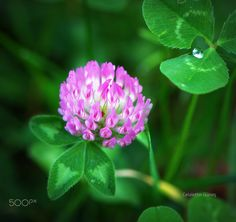 Revnak-ı Nevbahar - İLkbahar parlaklığı, renkleri ...