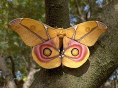 29Butterflies And Moths