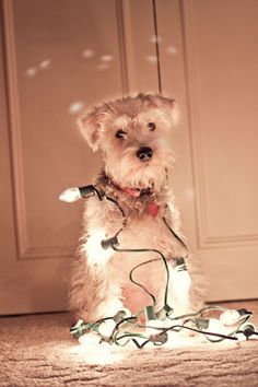 Merry and Bright!  Izzy's 1st Christmas photo by Tracy (http://tracys-trinkets-treasures.blogspot.com)