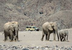 Hoanib Skeleton Coast, Namib Desert, Namibia, is a place of stark beauty, endless landscapes and desert-adapted wildlife. Safari Game, Wilderness, Skeleton, Things To Do, Remote, Wildlife, Coast, Elephant, Camping