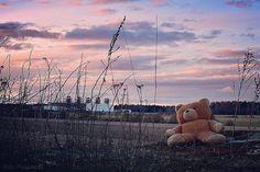 Teddy!!  #teddy #teddybear #bear #beafraid #dangerous #willbite #totally #wildlife #runforyourlife #photography #hobby #hobbyphotographer #nikond5500 #nikkorlens #50mm #nikonimages #nikonphoto #nikonphotography #colors #colorful #sky #abstract #phot