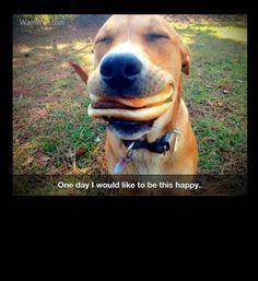 happy dog eating cheeseburger