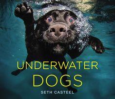 Underwater Dogs! omg this look like bodie!