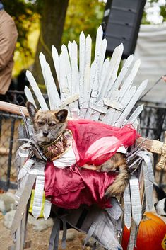"The 40+ Best Dog Costumes EVER  #refinery29  http://www.refinery29.com/2015/10/96371/new-york-dog-parade-pictures#slide-21  ""The Iron Throne is mine by rights.""..."