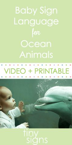 Baby Signing for Ocean Animals - Tiny Signs - Baby Sign Language Baby Sign Language Chart, Sign Language For Toddlers, Simple Sign Language, Sign Language Phrases, Sign Language Interpreter, British Sign Language, Kids Sleep, Child Sleep, Baby Sleep
