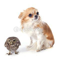 Dois amigos :)