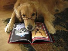 Shh, I'm reading #puppy #books  ...........