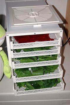 essiccare spinaci