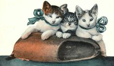 bumble button: Victorian cats