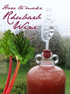 How to make Rhubarb Wine - use up all that extra rhubarb to make this easy and delicious summer drink. Sweet, tart, and plenty tipsy :-)