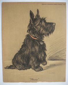 """"""" Please """" SCOTTY DOG, Pastels / Painting 1970s Art Print by 'MAC', Famous Retro"""