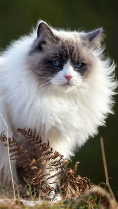 cat, fluffy, spring