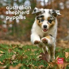 Australian Shepherd Puppies 2013 7X7 Mini Wall,