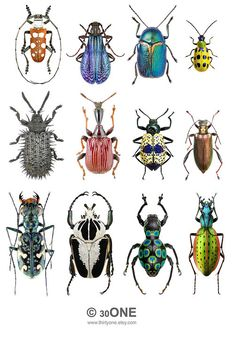 Printable PNG File - Colorful Insects - SET 2 - Collage Sheet - Digital Collage Sheet - For unlimited number of prints Posca Art, Bug Art, Insect Art, Beautiful Bugs, Bugs And Insects, Motif Floral, Art Plastique, Digital Collage, Collage Sheet