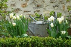 Spring by ellen