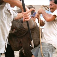 Urge Circus World to End Cruel Elephant Exhibits!