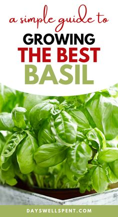 This simple guide has everything you need to know about growing and harvesting basil. Plus the secret to an endless supply of basil. #herbgarden #organicgardening #basil #urbanhomesteading #backyardgarden Backyard Vegetable Gardens, Vegetable Garden Design, Organic Gardening, Sustainable Gardening, Indoor Gardening, Gardening For Beginners, Gardening Tips, Types Of Basil, Vertical Garden Design