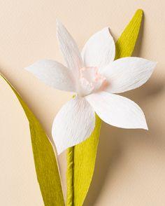 paper flower narcissus