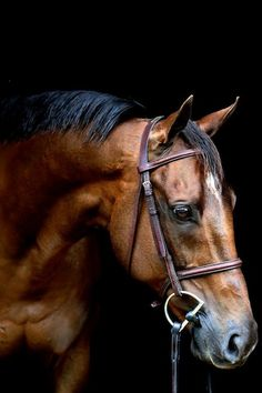 $25 New Holland stallion granted new life ~ a heart warming story ♥