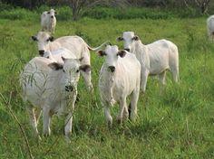 30 - Os biomas no estado do Mato Grosso do Sul