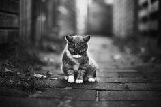 20 удивителни снимки на котки   High View Art