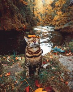 Post with 3387 votes and 124066 views. Tagged with cute, cat, cats, aww, animals; Kitty finding his inner zen in the outdoors I Love Cats, Crazy Cats, Cute Cats, Funny Cats, Funny Animals, Cute Animals, Funny Humor, Adorable Kittens, Pretty Cats