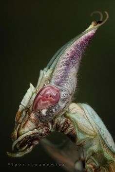 "Monster mantis. Yep really gross....hummm but yet it looks familiar....I believe this may have been the inspiration to the monster in the movie ""Aliens:"