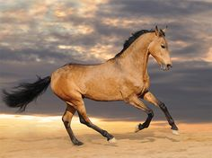 Spanish Barbs: The Original Horse?