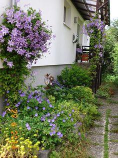 Foto Mein Schoener Garten De http mein schoener garten de jforum posts list 2130 4815627