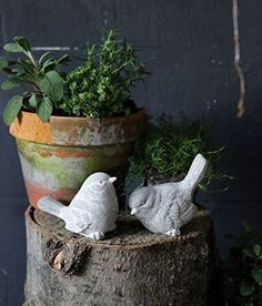 Set of Two 412 W Cement Birds 2 Styles >>> You can get additional details at the image link.  This link participates in Amazon Service LLC Associates Program, a program designed to let participant earn advertising fees by advertising and linking to Amazon.com.