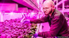 The light fantastic: indoor farming