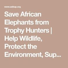 Save African Elephants from Trophy Hunters | Help Wildlife, Protect the Environment, Support Nature Conservation, Save the Planet