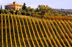 Winery in Toscana, Italy Cabernet Sauvignon, Sauvignon Blanc, Tuscany Vineyard, Italian Vineyard, Under The Tuscan Sun, Chenin Blanc, Places To Travel, Places To See, Wine Vineyards