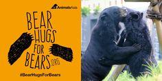 Bear Hugs for Bears Week, 2 - 9 May 2016 Bear Hugs, Pet Day, My Animal, Make Me Smile, Bears, Animal Rights, Animals, Nature, Animales