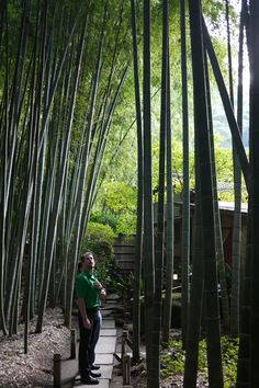 Chase in the bamboo temple
