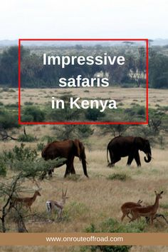 Kenya is a magnificent country for safaris and seeing wildlife during a game drive.