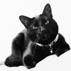 Black Soul Cat