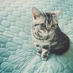 """HIS ADORABLE LITTLE ROUND FACE LOOKS LIKE ONE OF MY KITTIES... """"BITER"""" ...NAME SAYS IT ALL LOL.."""