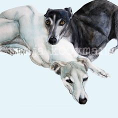 Lying Whippets / sighthounds Liggende Whippets / liggende greyhounds / lying greyhounds dog art prints by Tanja Kooymans