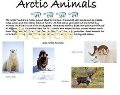 This student workbook activity describes animals that live in the Arctic.  It explores hibernation, pack life, herding and migration.  This talks about what animals do for survival and adaption.  There are 4 activities for students including Identifying and the food chain.