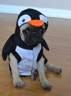 Our Pug Penguin Boo #pugcostume #pughalloween #pugpenguin