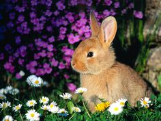 Always find cute little bunnies in my flowers.