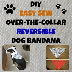 free sewing patterns for dogs