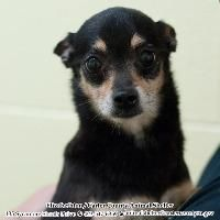 MY NAME IS BETTY. I WAS A VERY SWEET LITTLE GIRL. THEY EUTHANIZED ME FOR SPACE. PLEASE, PLEASE ADOPT, DON'T SHOP!!!