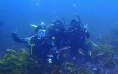 DIVE OCEANS Blog: お客様からのご感想