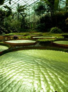 giant lily pads - yes, please. would love to have this greenhouse! Kew Gardens, Outdoor Gardens, Outdoor Rooms, Beautiful World, Beautiful Images, Beautiful Homes, Garden Pool, Water Garden, Cool Plants